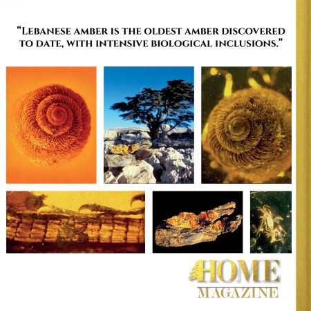 """Lebanese amber is the oldest amber discovered to date, with intensive biological inclusions."""