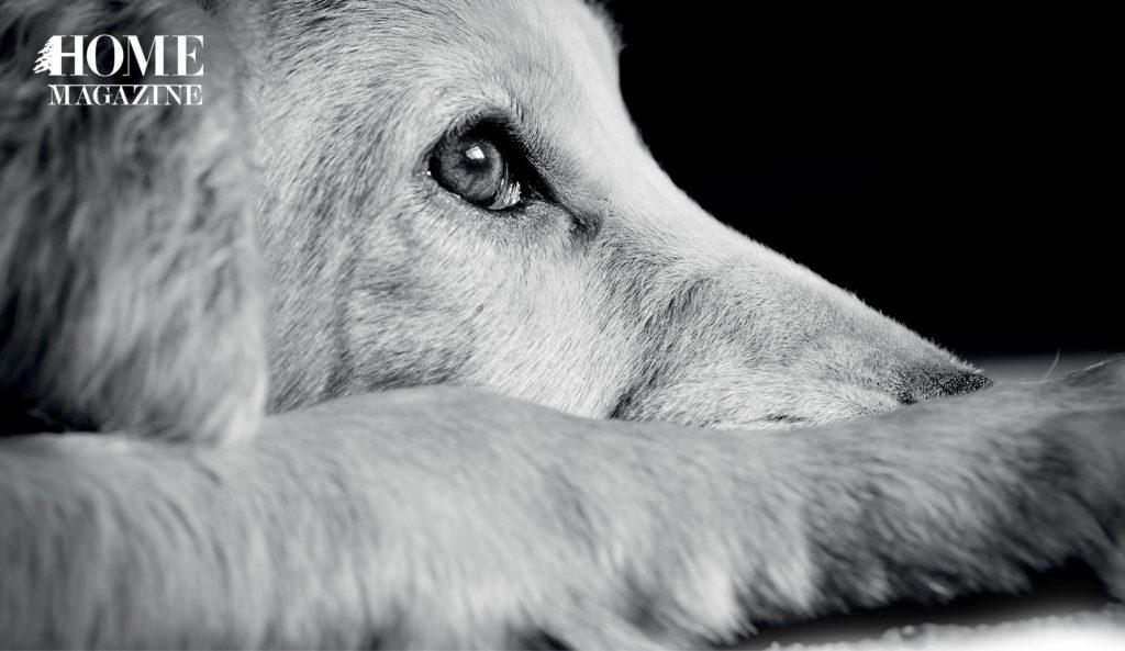 Dog's face profile