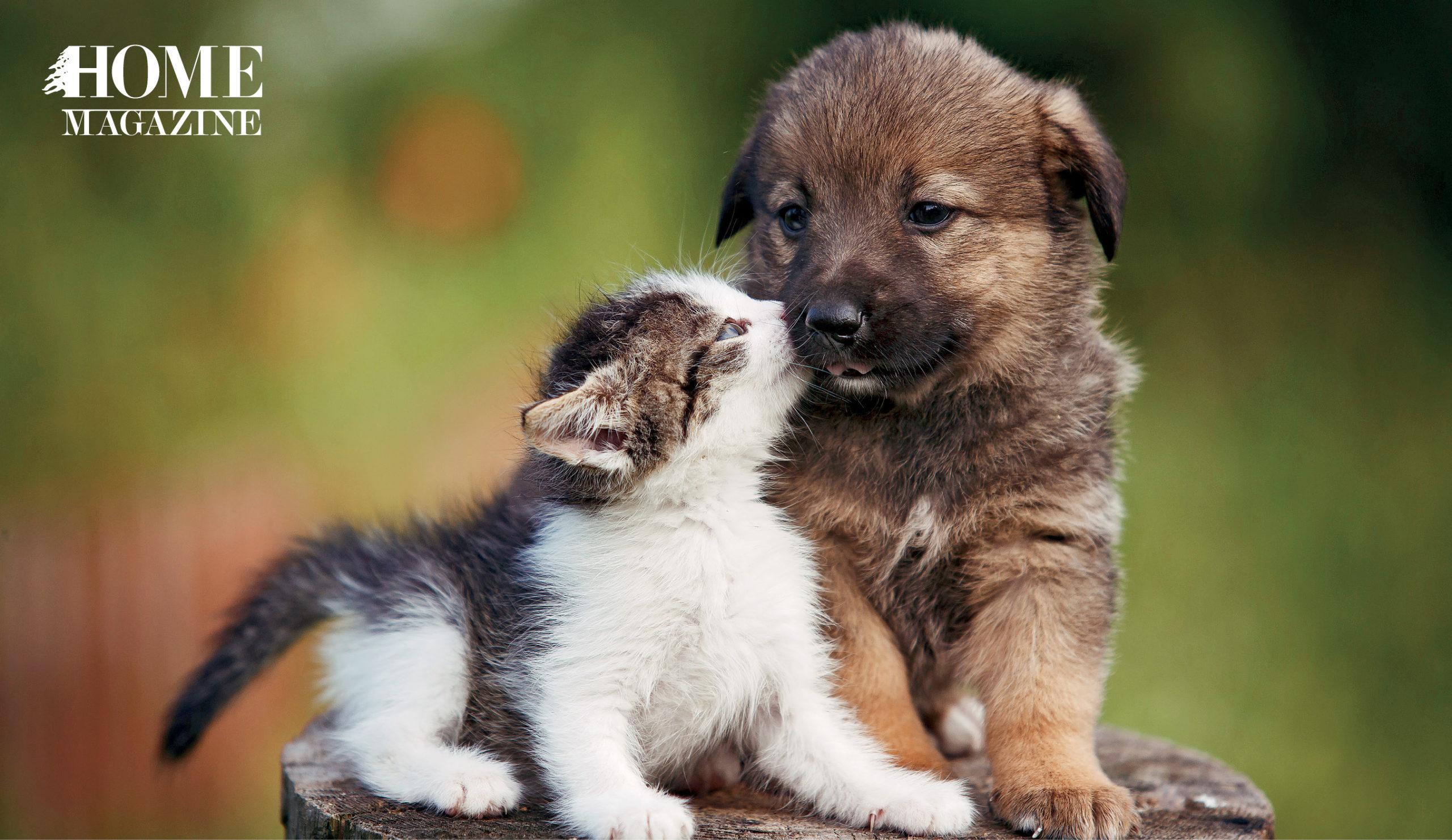A puppy and a kitten cuddling